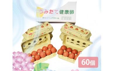 No.070 小川エッグの赤たまごLサイズ贈答用 60個 / 卵 タマゴ 玉子 新鮮 千葉県 人気