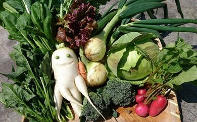 A10 かずちゃんの朝採り新鮮野菜セット【みやき町産朝採り野菜をお届け】