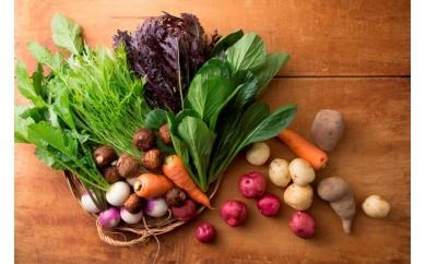 【A54】おかもファームのほっこり野菜セット
