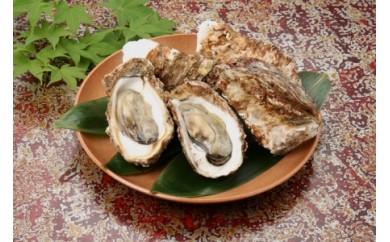 D-185 日本海の新鮮岩がき【5pt】