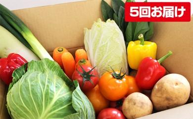 [№5773-0045]熊本県合志の旬のお野菜定期便 年5回コース