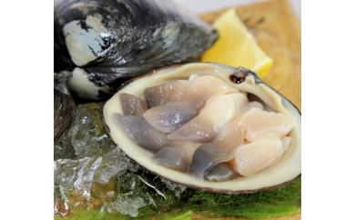 鵡川漁協特選:活大ほっき貝