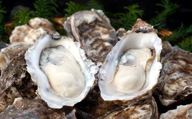 [№5863-0049]殻付牡蠣の食べ比べセット!(生食用)