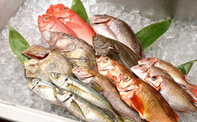 [№5921-0026]【光勝丸】漁師さんのおまかせ鮮魚セット