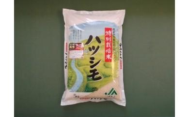 A4 特別栽培米 ハツシモ