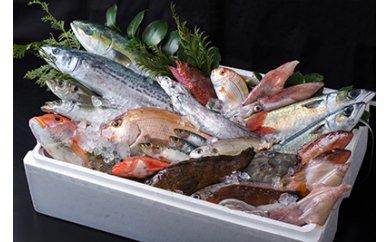 A-041★基山で海の幸!対馬と広域連携★定置網で獲れた活き〆島魚2kgセット