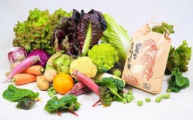 D-303 佐賀県産「季節の野菜とお米セット」 8品&5kg【直売所オススメ!!】