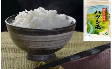 (25)岐阜県産特別栽培米ハツシモ(5kg)