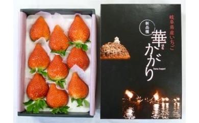 (63)岐阜いちご 華かがり(8玉~12玉  約400g×2箱)