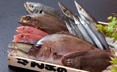 B0-17 【九州・佐賀産】獲れたて鮮魚セット【頑固板前のこだわり目利き】