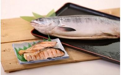 【227】日高産 時鮭(ときしらず)