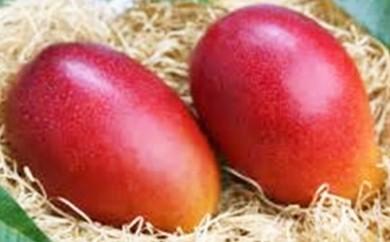 【B-026】★数量限定★ 青果市場厳選 宮崎県産完熟マンゴー 2玉