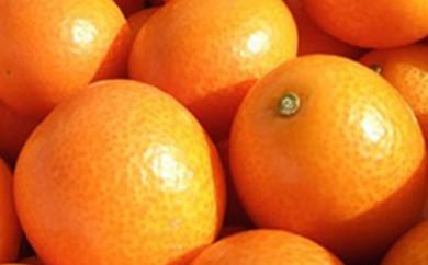【A155】★数量限定★青果市場厳選 鹿児島県産 完熟金柑 約2kg