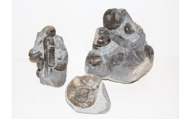 B01「北海道産アンモナイト」(母岩付)/1個