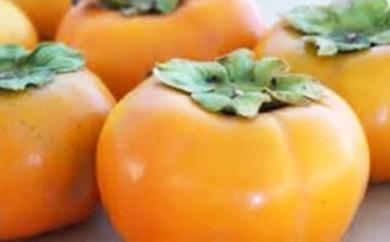 【A152】青果市場厳選 福岡県産「冷蔵」あま柿<12月発送開始分先行予約>