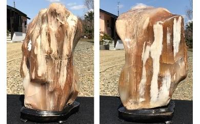 G01「木化石」/1個