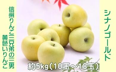 A-34 りんご シナノゴールド【約5kg】