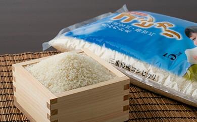 【平成30年度産】三重県産コシヒカリ どっさり13kg (5kg×2、3kg×1)【予約受付/9月末より発送】