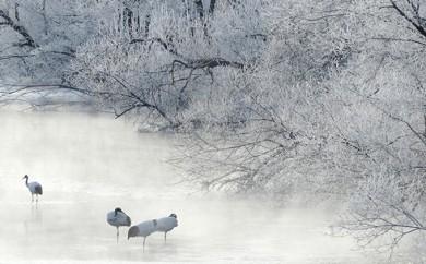 [№5766-0055]釧路湿原タンチョウウォッチング 2名様分