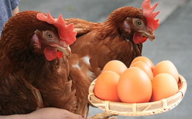 【期間限定】卵かけごはん食べ比べランキング1位!!紀州うめたまご50玉入