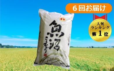 【D2902】魚沼産コシヒカリ 定期便60kg(10kg×6回)