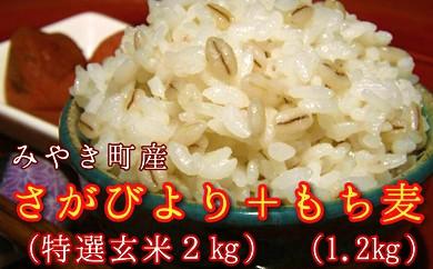 A14-O 【H29年産米】有機肥料使用≪特選さがびより≫【玄米2㎏】ともち麦セット