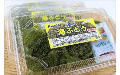 【数量限定】農薬不使用シークヮーサー&海ぶどうセット