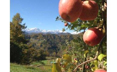 403*信州小川村成就地区限定季節の特選りんご5キロ(早生品種りんご~サンふじりんご)2回お届け!