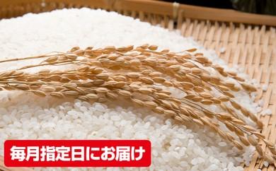 [№5698-0249]兵庫県加西市産 特A米相当コシヒカリ 5kg×12回【定期便】