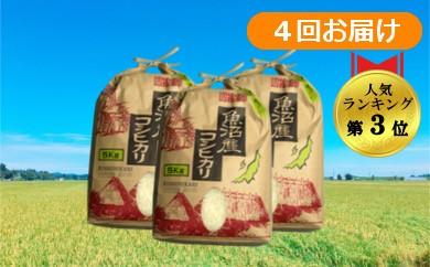 【D2901】魚沼産コシヒカリ 定期便60kg(15kg×4回)