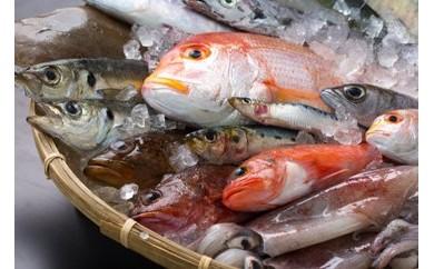 B5-007 ★基山で海の幸!対馬と広域連携★定置網でとれた新鮮活き〆島魚3㎏セット