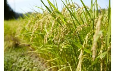 【特別栽培米】たかたのゆめ 白米10kg