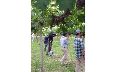2102 山梨市の旬な果物とワインを味わう農業体験イベント