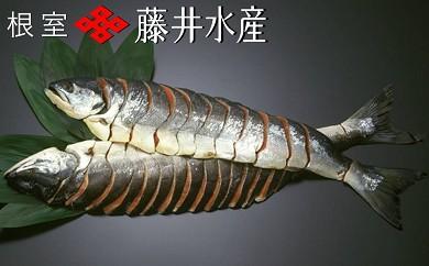 CB-09001 【北海道根室産】<鮭匠ふじい>時しらず鮭半身姿切身[334839]
