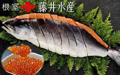CB-09004 【北海道根室産】<鮭匠ふじい>いくら醤油漬・時しらず鮭[334840]