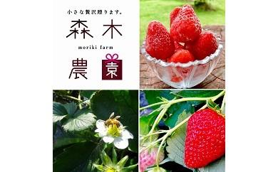 1-207 森木農園が作る、濃く甘いちご『紅ほっぺ』冷凍いちごにしてどーんと3kg以上!!
