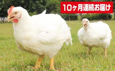[№5729-0103]【10ヶ月連続お届け】信州白鶏もも・信州白鶏むね4kg