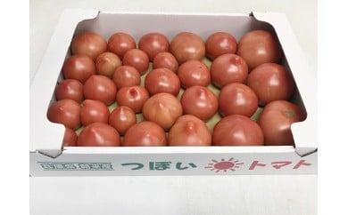 A-41 坪井農園 こだわりトマト【規格外品】3.5kg(6月上旬から順次発送)