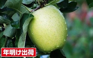 [№5731-0134]【年明け出荷】青森県親子三代最高位の「王林」家庭用約3kg
