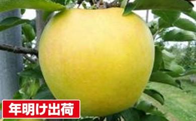 [№5731-0142]【年明け出荷】青森県親子三代最高位の「シナノゴールド」家庭用約3kg