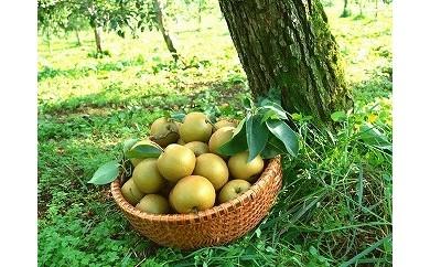 行方で育ったおいしい梨 幸水5kg