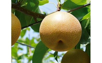 行方で育ったおいしい梨 豊水5kg