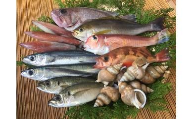 B197 「一日漁」夏限定のおまかせ鮮魚