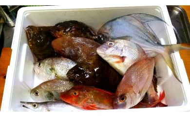 季節の鮮魚おまかせ約3種類セット【下処理済み】【曜日指定必須】_0F02