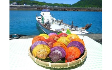 【A-26】土佐清水の長太郎貝(ヒオウギ貝)【15個入】