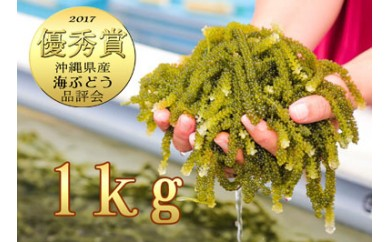 【2018年産先行予約】伊是名島育ちの海ぶどう(1kg)