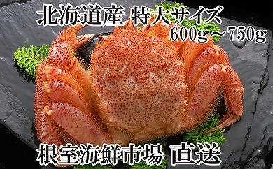 CA-14028 根室海鮮市場<直送>北海道産浜ゆで毛がに600~750g×1尾[338307]