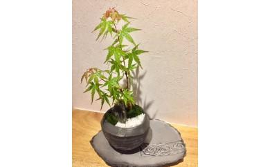 【B-61】ミニ盆栽鉢セット(菊間瓦製 菊間町) 1.0P