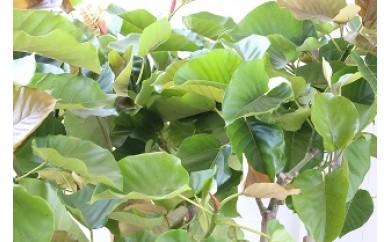 NLo6 植物のある暮らしを楽しむ シーズン①