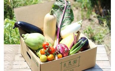 D-04 採れたて!良農園のおいしい野菜の定期便【年6回:偶数月配送】